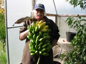 We may be living in the cool temperate parts of Australia, but we've grown BANANAS